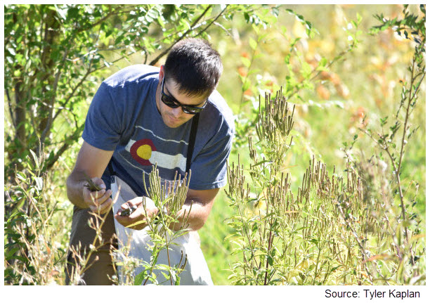 Travis Provin participating in seed-picking project, September 2016